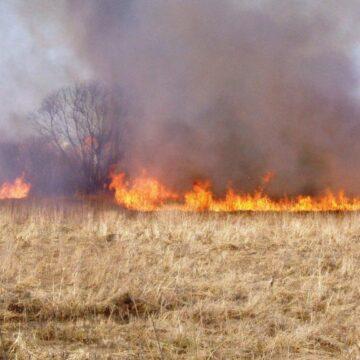 «Хазяйновиті» палії: за добу 7 пожеж на відкритій території