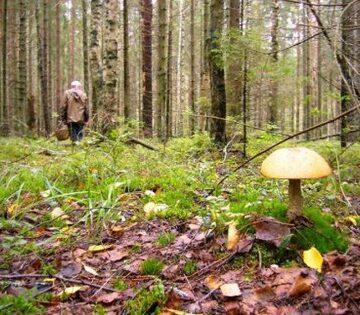 Знову шукали грибника. Цього разу у Долинському районі