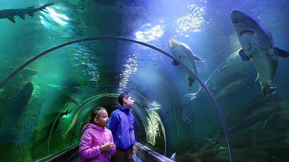 У сусідньому Львові у серпні планують відкрити великий океанаріум