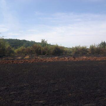 На Городенківщині пожежа знищила 2 га пшениці