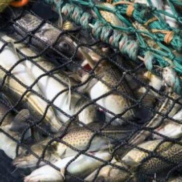 Штрафи для рибалок-браконьєрів в Україні можуть значно зрости