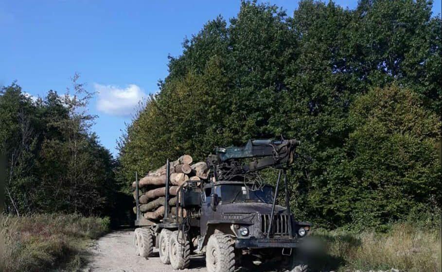 На Долинщині і Тлумаччині зупинили вантажівки із зрізаними дубами