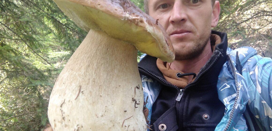 Грибний «бум»: прикарпатські грибники міряються зібраним «врожаєм» у мережі
