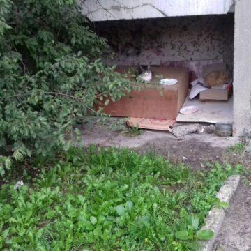 """""""За котів горло перегризу"""": любителька тварин у франківській багатоповерхівці погрожує прибиральниці"""