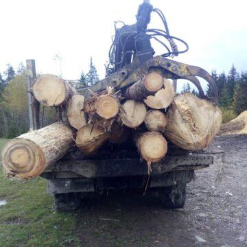 У Ворохті поліцейські затримали вантажівку з деревиною