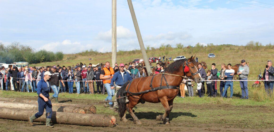 На Коломийщині влаштували змагання із кіньми