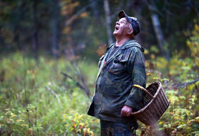 У лісах Прикарпаття масово губляться грибники