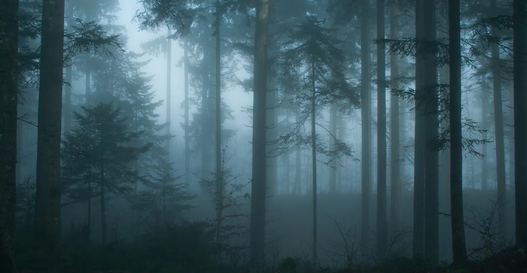 На Рожнятівщині продовжуються пошуки зниклого ще 18 листопада чоловіка