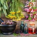 На Долинщині планують вирощувати та переробляти лікарські рослини