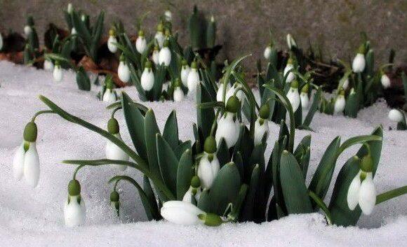 Перші дні весни в Україні будуть вологими